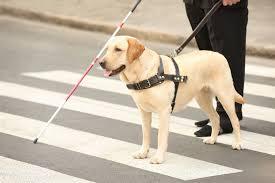 pas vodič bijeli štap pješački